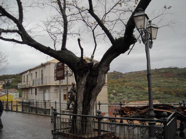 L'olmo di Montepaone (CZ)