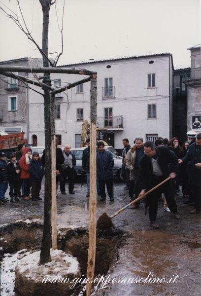 Piantumazione quercia con l'assessore Giuseppe Musolino